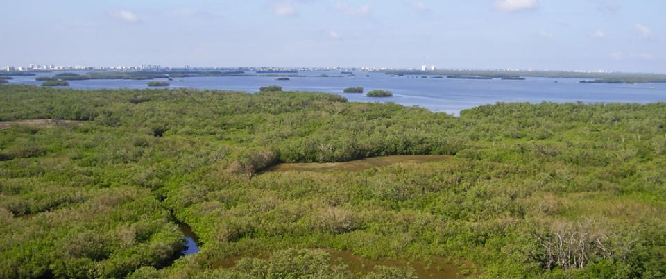 Estero Bay Preserve