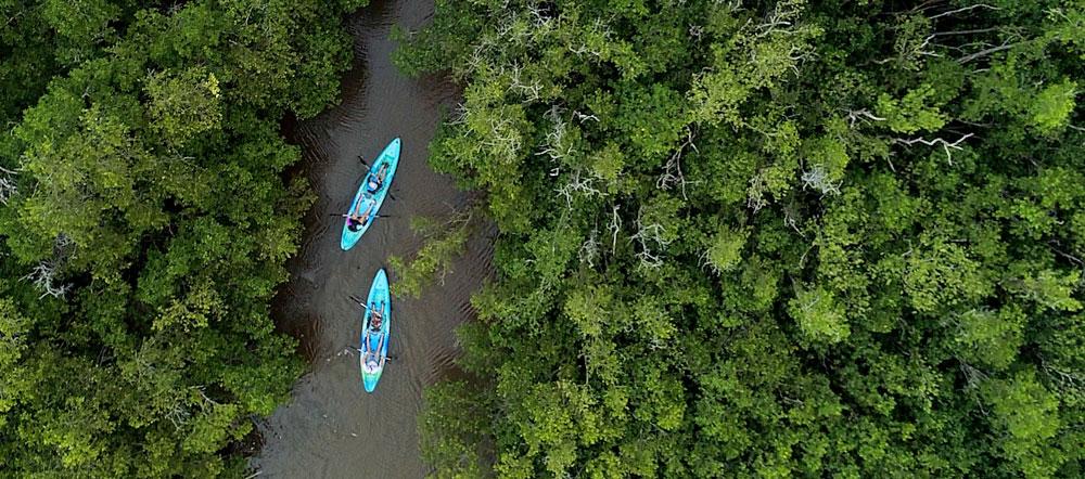 Kayaks making their way through a trail