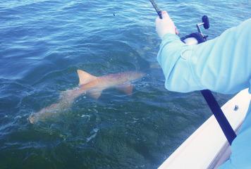 Fishin Frank's Fishin Updates!