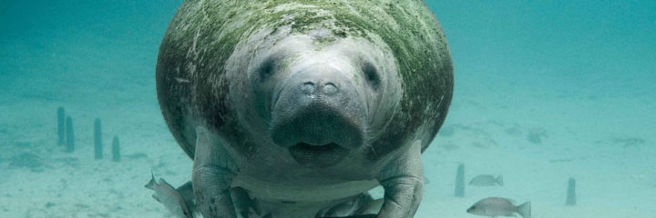 SWFMIA'S COMMENT ON MANATEE REGULATIONS