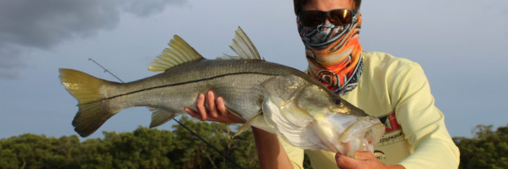 Snook to reopen in Gulf waters